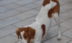 Ecco i segnali calmanti che i cani usano fra loro per diminuire l'aggressività dei propri simili