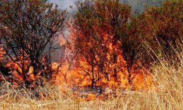 """Incendio Calci e Vicopisano Confcommercio: """"Pronti ad ospitare le persone sfollate"""""""