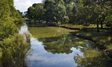 Rinnovo Presidenza del Parco Migliarino-San Rossore, per ReteDem scenari preoccupanti