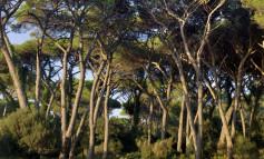 Via al palio ippico dei Comuni: per i Cascinesi ingresso gratis all'ippodromo di San Rossore