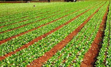 Agromafie: presentato il rapporto Coldiretti, Eurispes e Osservatorio su Criminalità Agroalimentare