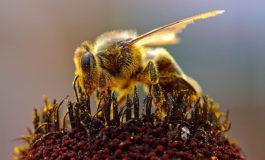 A Pisa un seminario sulla salute delle api