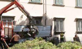 Pisa: rimosso pino pericolante in piazza D'Ancona