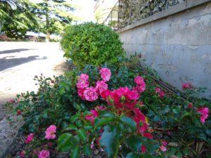 maggio a Calcinaia 1