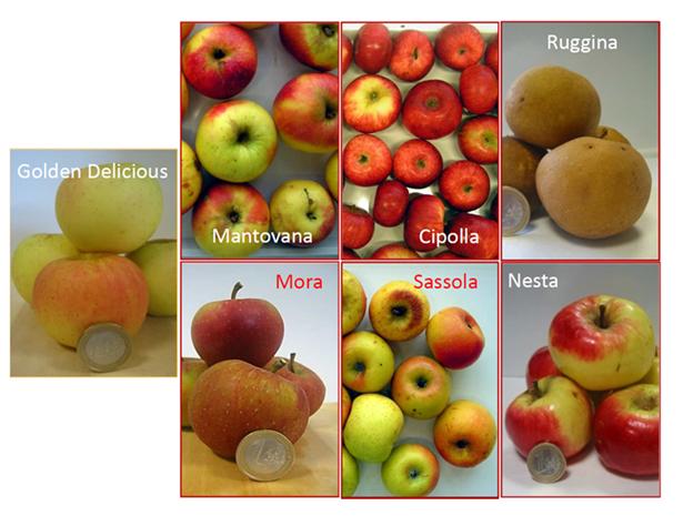 """Uno studio rivaluta le antiche mele """"Brutte ma buone"""""""