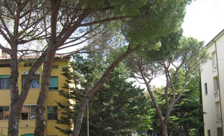 Sicurezza: rimozione di due alberi pericolanti