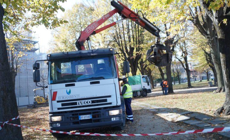 Pisa, si ripiantano i tigli in Piazza San Paolo a Ripa D'Arno