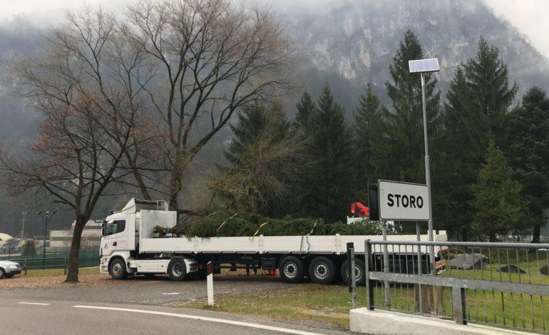 In arrivo a Pisa l'Albero di Natale della Valle del Chiese