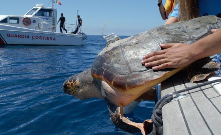 Dove nuotano le tartarughe, uno studio dei biologi dell'Università di Pisa