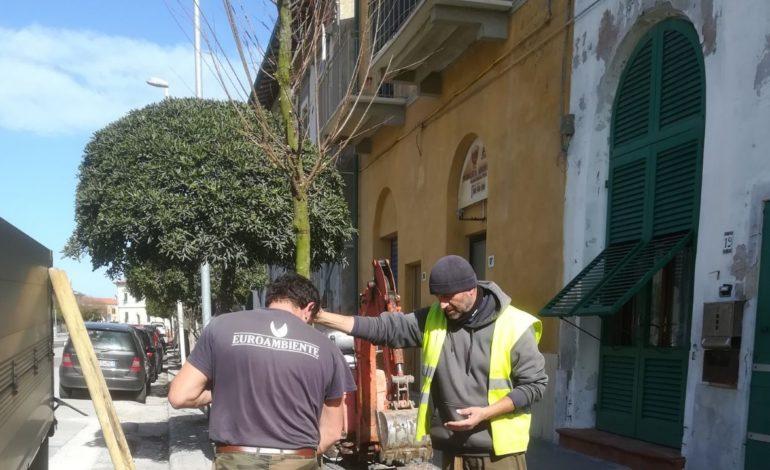 Marina, si piantano 90 tamerici in via Moriconi