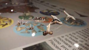"""Il reperto di Lamna nasus dal Pliocene di Castelnuovo Berardenga conservato presso l'esibizione permanente del """"Gruppo AVIS Mineralogia e Paleontologia Scandicci) (Badia a Settimo, Scandicci, FI)."""
