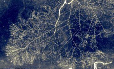 """Scoperta una rete fungina che nutre le piante: la """"wood wide web"""""""