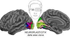 Studio dell'Università di Pisa dimostra la plasticità del cervello anche negli adulti