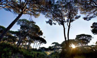 San Rossore, il Parco da scoprire da Pasqua al 1° maggio