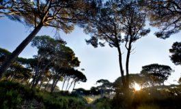 """Movimento Cinque Stelle: """" Il parco di Migliarino San Rossore Massaciuccoli è un parco senza speranza"""""""