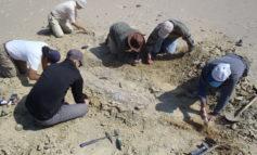 Scoperto il primo archeoceto che raggiunse l'Oceano Pacifico oltre 42 milioni di anni fa