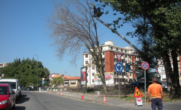 Rimozione alberi pericolanti