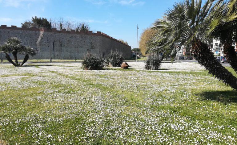 """Campo sportivo di Santa Marta, Confcommercio: """"Non vogliamo trasformarlo in un parcheggio"""""""
