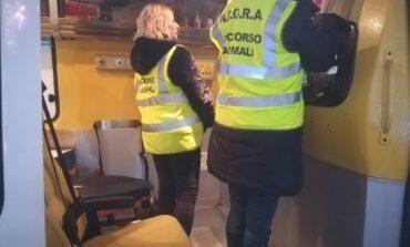 Capodanno, volontari del Soccorso animali in città con l'ambulanza veterinaria