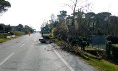 Consorzio Basso Valdarno, rimosse in urgenza alcune alberature pericolanti a Pisa