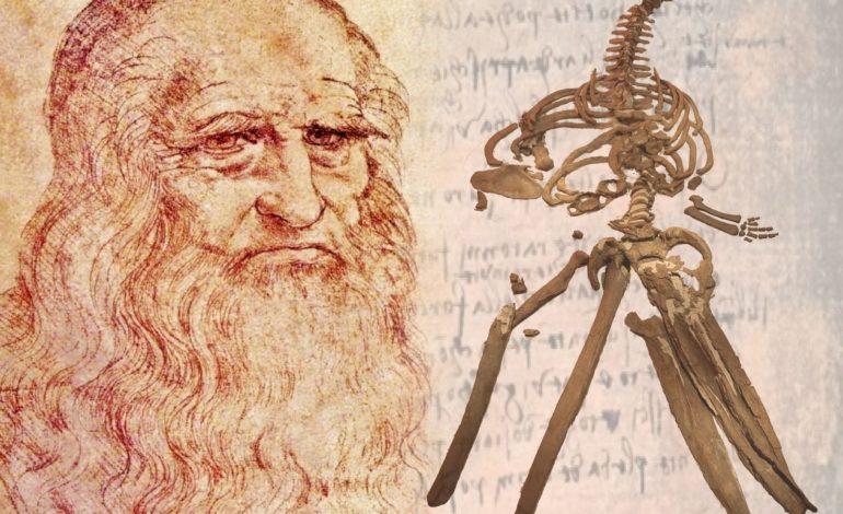 Non un mostro marino, ma un fossile di cetaceo: svelato il mistero della balena di Leonardo