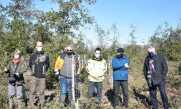 3400 nuovi alberi nella Macchia Lucchese