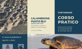 A Calambrone un corso gratuito sulla nidificazione della tartaruga marina Caretta caretta sulla costa pisana